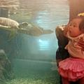 2012 9 30 澎湖水族館 (121)
