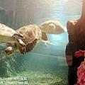 2012 9 30 澎湖水族館 (122)