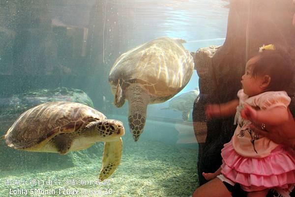 2012 9 30 澎湖水族館 (124)
