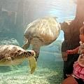 2012 9 30 澎湖水族館 (125)