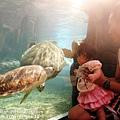 2012 9 30 澎湖水族館 (126)