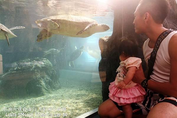 2012 9 30 澎湖水族館 (127)