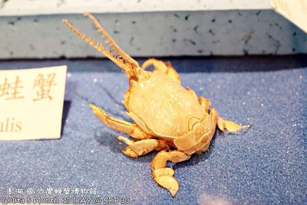 竹灣螃蟹館 (23)