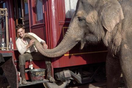 大象的眼淚-3