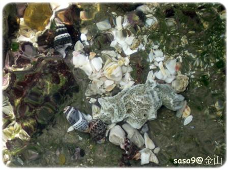 石門龍洞有很多寄居蟹喔~