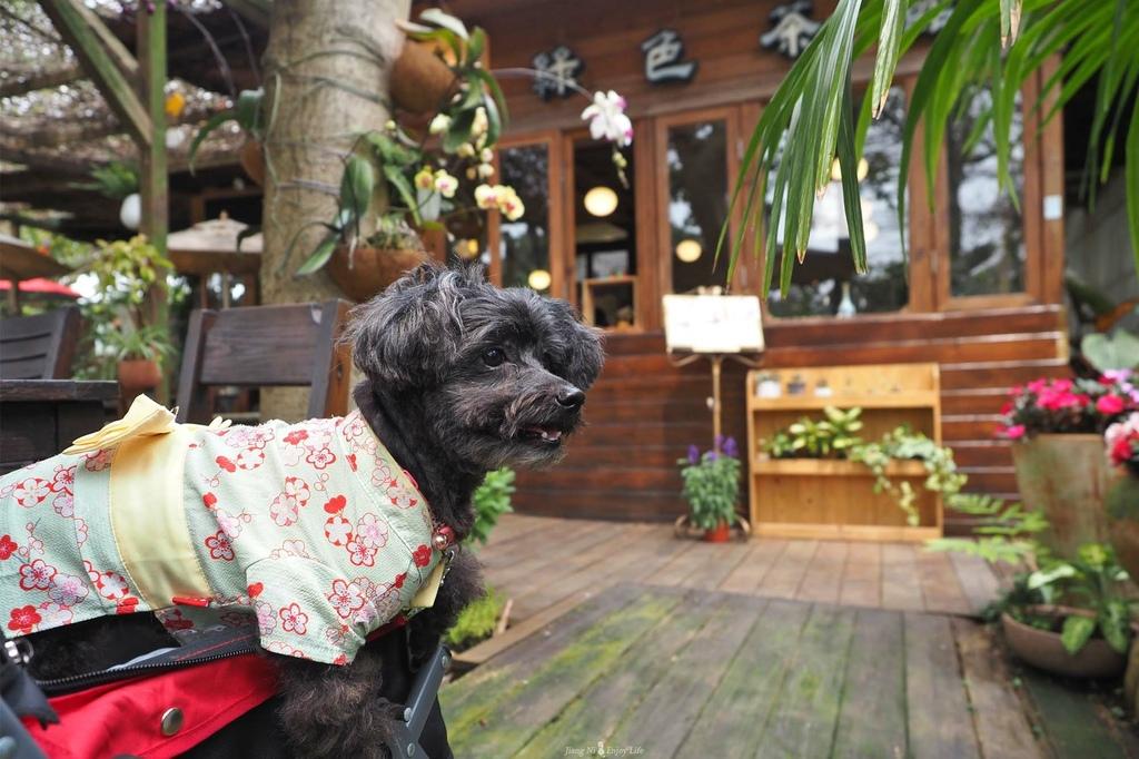 D%26;B綠色茶館青埔美食大園咖啡廳寵物友善
