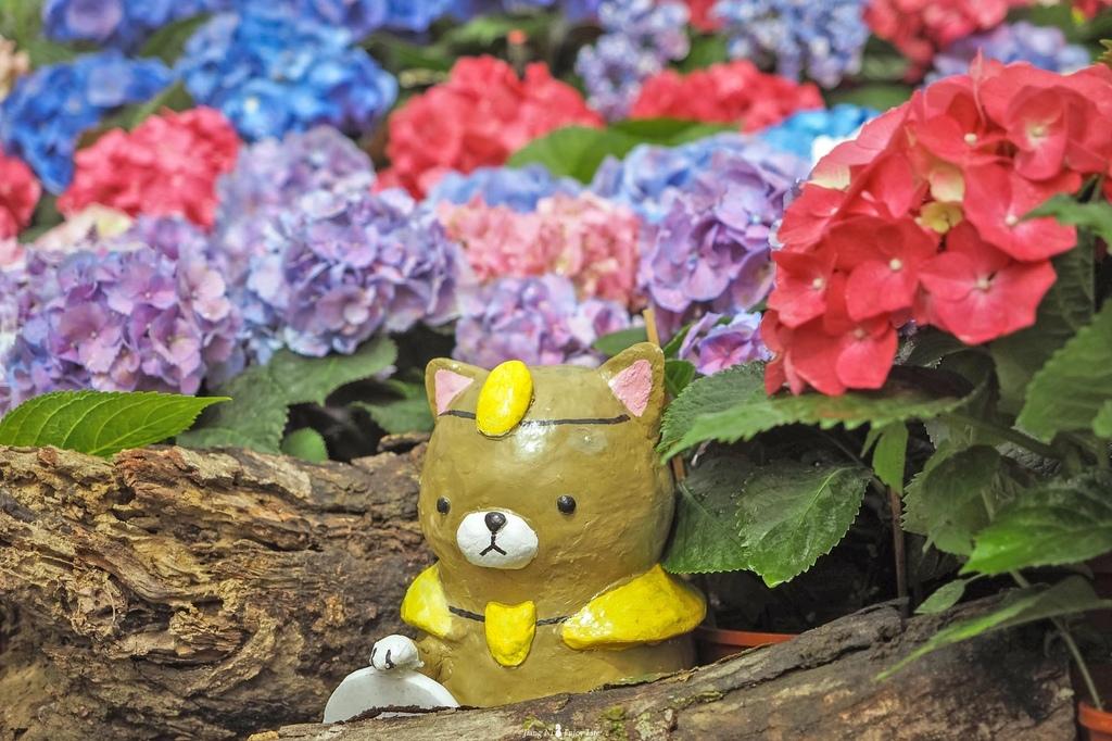 桃園繡球花季中興花卉枕頭山圈復興鄉景點