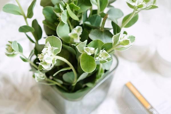 bouquet_plant