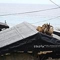 地下屋頂滴羊兒