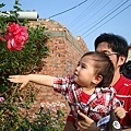 美麗的大紅花
