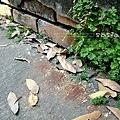巷子裡的落葉