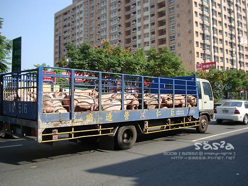 鳳山建國路上滴豬豬車