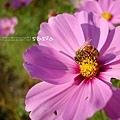 我愛的蜜蜂一系列