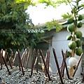 我愛這張~園子裡的木瓜與芒果,圍牆一定要有釘子!