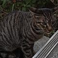 路邊的野貓