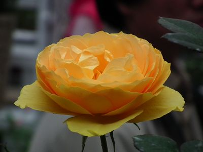 20110223 104(001).jpg