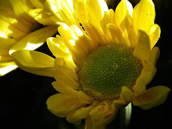 20111121 010(001).jpg