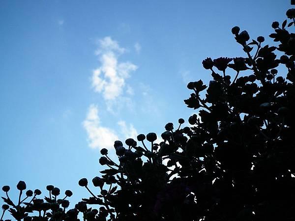 20111121 052(001).jpg