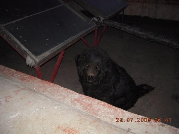 飯店旁飼養的熬犬,就在我們窗外,聽說幾年前生一場病差一點死掉後,就沒像之前的兇猛了,但他的主人還是將他飼養在頂樓,看他最興奮的就是~他的主人到來!我們與他兩天他也開始習慣