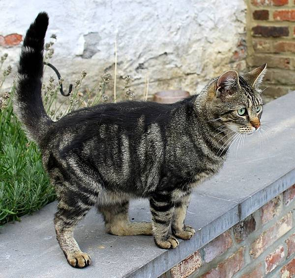 cat-long-tail.jpg