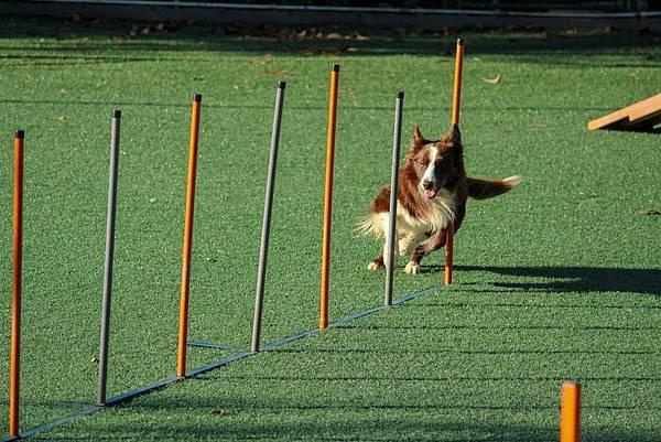 活潑好動的小狗是人工智慧的教練?四足機器人是未來趨勢?(上)