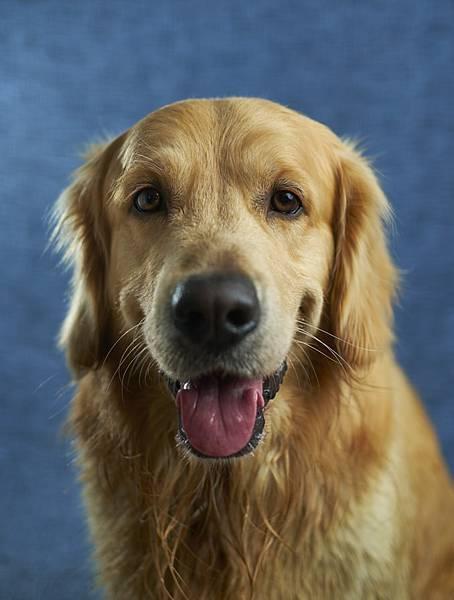 人工智慧機器導盲犬誕生拉~導盲犬地位要不保了嗎?