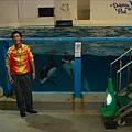 接下來是海豚表演