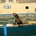 這隻海獅叫nana