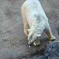 北極熊嘴裡的是相機