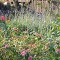 後來跑到薰衣草花園