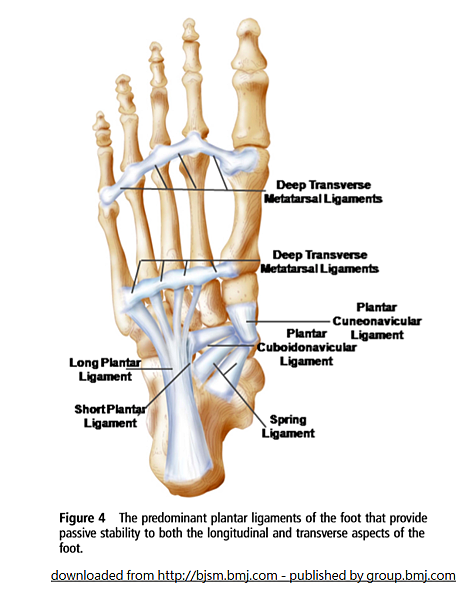 foot subsystem passive stability