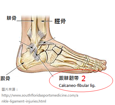 Ankle-sprains_physiotherapy 中2