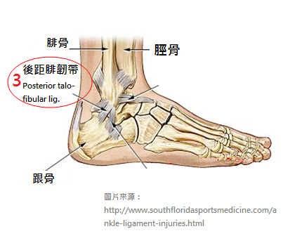 Ankle-sprains_physiotherapy 中3