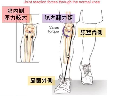 knee loading 2.jpg