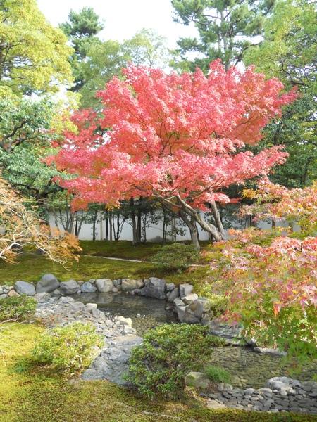 2009京都之旅 京都御所與北野天滿宮15