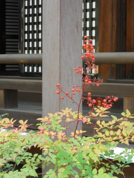 2009京都之旅 京都御所與北野天滿宮16