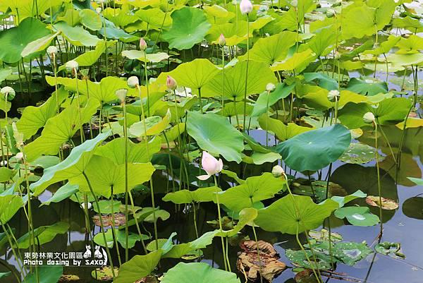 東勢林業文化園區6.jpg