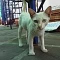 Bangkok 519.jpg