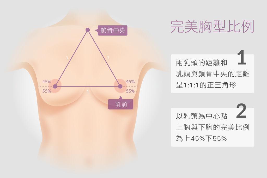 光彩胸部比例.jpg