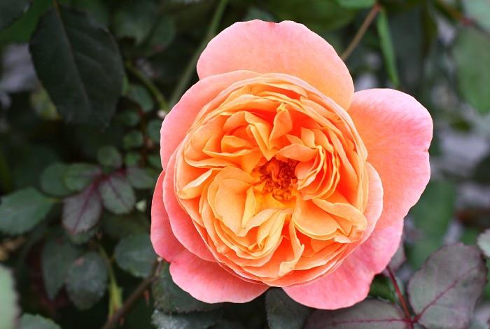 flowers_360_964.jpg
