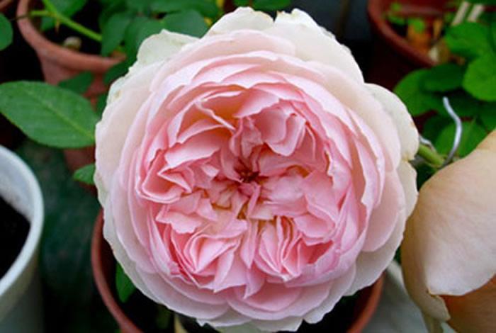 flowers_376_376.jpg