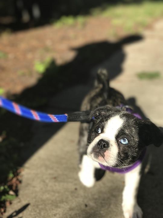 puppy-2827957_960_720.jpg