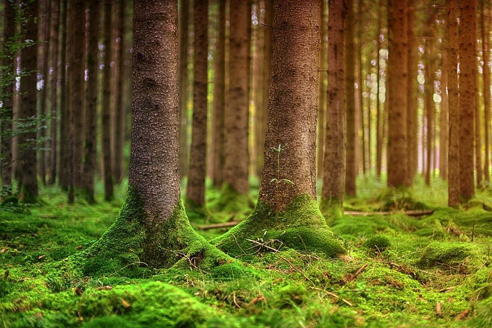 forest-3315896_960_720.jpg