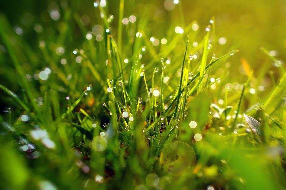 grass-3199370_960_720.jpg
