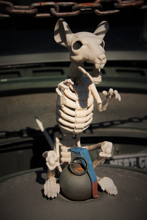 skeleton-rat-1785027_960_720.jpg
