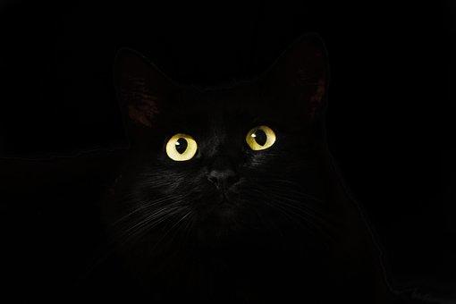 black-2944820__340.jpg