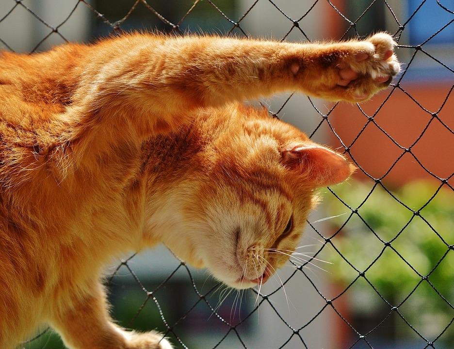 cat-1455463_960_720.jpg