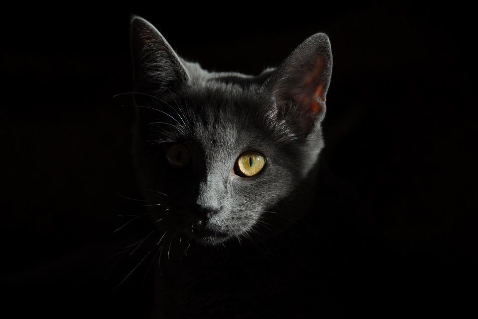 cat-778315_960_720.jpg