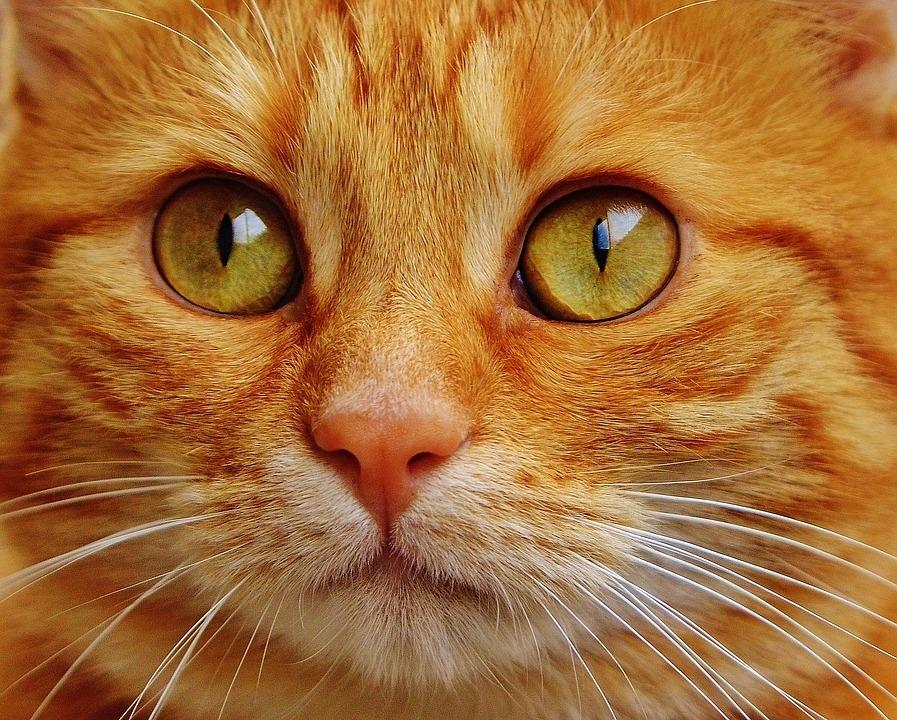 cat-1652880_960_720.jpg