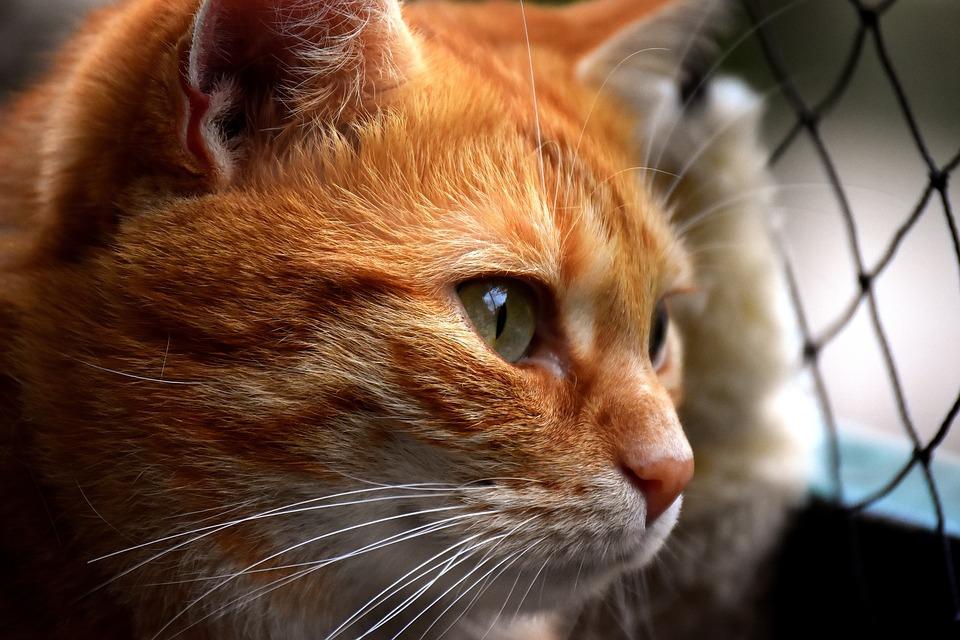 cat-3279064_960_720.jpg
